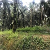 Photo Kuala Krai Agricultural Land For Sales