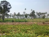 Photo 43 Acres Golden Beach Trombol, Kuching