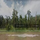 Photo Agri land for rent jenjarom, kuala langat, banting