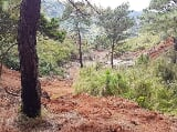 Photo Land for sale in La trinidad, Benguet - 1704-