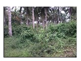 Photo Raw / Agricultural Lot For Sale
