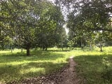 Photo 21-Hectares Lot for Sale in Carcar