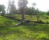 Photo Land and Farm For Sale in Macrohon for ₱...