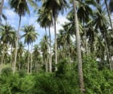 Photo Land and Farm For Sale in Kiblawan for ₱...