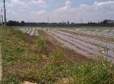Photo Mexico Pampanga agricultural lot, 24.3275 hectares