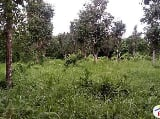 Photo Agricultural Lot for sale in Victoria