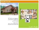Photo DISCOUNT 200K: Celandine, Gardens of Portico2