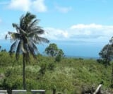 Photo Lot For Sale in Dauin for ₱ 858,200 with web...
