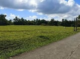 Photo Subdivided Farm Lots for Sale at Brgy Bilog...