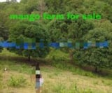 Photo Land and Farm For Sale in General Santos City...