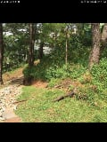 Photo Land for sale in Imelda R. Marcos, Baguio