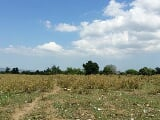 Photo 1. 9 Hectares Farm Lot