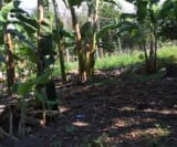 Photo Lot For Sale in Cotabato for ₱ 1,800,000 with...