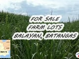 Photo Agricultural Lot for sale in Mandaluyong