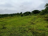 Photo Farm Lot for sale in Taysan Batangas