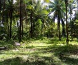 Photo Land and Farm For Sale in Iloilo City for ₱...