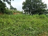 Photo 14 Hectares Lot for sale at Brgy San Mateo,...