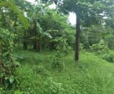 Photo Land and Farm For Sale in Indang for ₱...