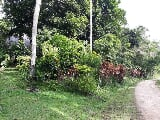 Photo Guimaras 500m from Beach in Lot for Sale