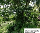 Photo Agricultural Lot for sale in Oas