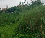 Photo Land and Farm For Sale in Tagaytay City for ₱...