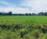 Photo Land and Farm For Sale in Tantangan for ₱...