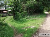 Photo 9,999 sqm title with 200 coconut trees, mango...