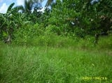 Photo Foreclosed Abandoned Lot for Sale in Bo. Noli...