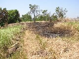 Photo 5 hectares Titled Lot for Sale