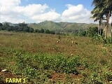 Photo Land for sale in Alae, Manolo Fortich