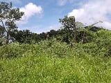 Photo 12 hectares farm lot, camp 3, tuba, benguet