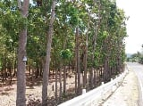 Photo 1.5-ha Land for Sale along the Highway in Siquijor