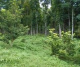 Photo Land and Farm For Sale in Cabatuan for ₱...