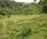 Photo Land and Farm For Sale in Balilihan for ₱...
