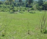 Photo Land and Farm For Sale in Ubay for ₱ 1,700,000...