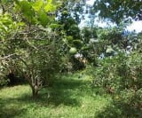 Photo Land and Farm For Sale in Magallanes for ₱...