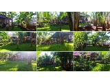 Photo Palawan House and Lot for