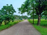 Photo Farm lot for sale -1.5hectares-tiaong quezon