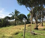 Photo Land and Farm For Sale in Tanay for ₱...