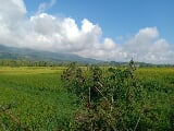 Photo Agricultural/ Farm Lot (1.5 hectares) in Nueva...