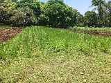 Photo Farm Land for Sale at Lumbia Cagayan de Oro City