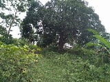 Photo 20000 sqm san lorenzo Guimaras Property