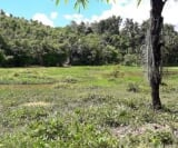 Photo Land and Farm For Sale in Tagum City for ₱...