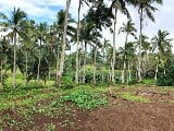 Photo 1.9 Hectares Farm Lot for Sale